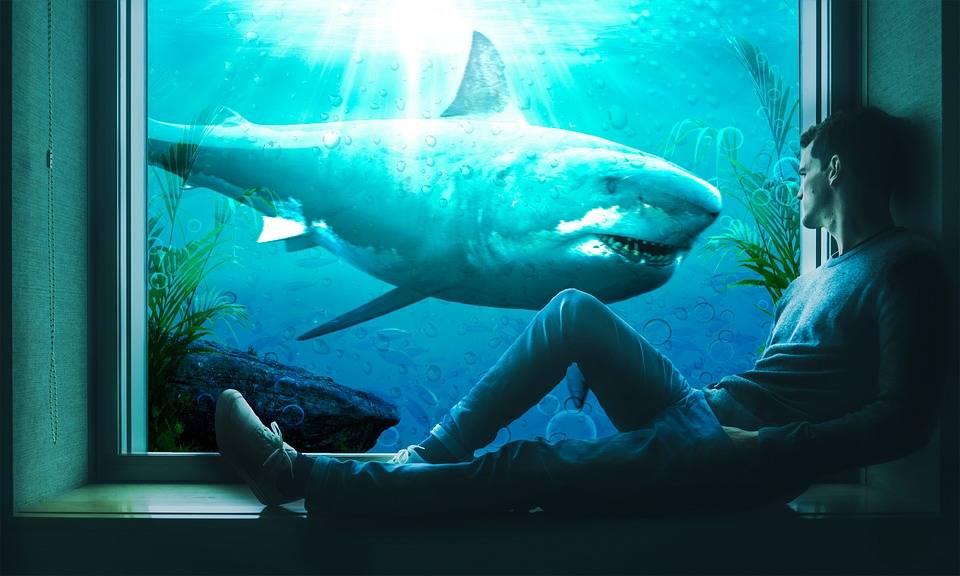 К чему снится акула. видеть во сне акула - сонник дома солнца