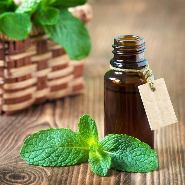 Эфирное масло пачули: свойства и применение