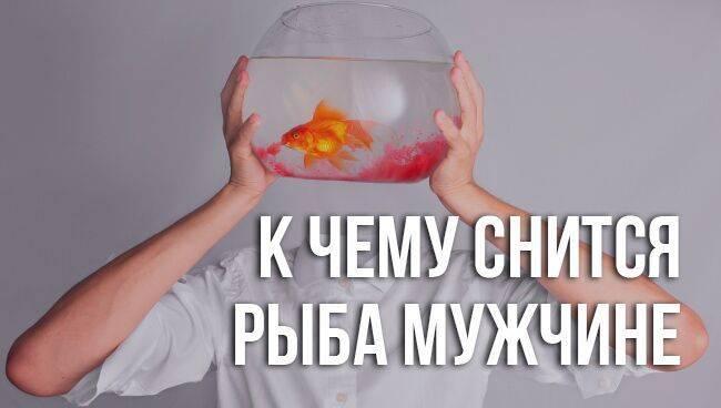 Кчему снится рыба живая женщине: полное толкование посонникам