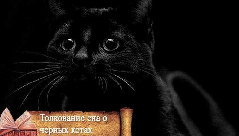 Сонник черный злой кот. к чему снится черный злой кот видеть во сне - сонник дома солнца