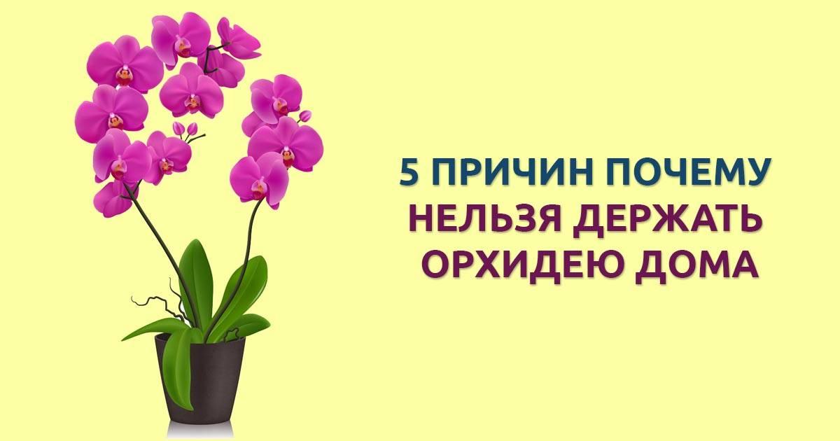 Можно ли держать дома орхидею - 46 примет, суеверия (как лучше расположить в квартире)