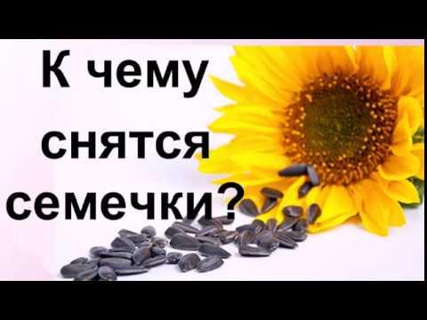 К чему снятся семечки подсолнуха? грызть семечки во сне к чему? :: syl.ru