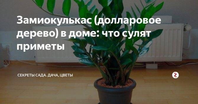 Какие цветы должны быть дома обязательно, фото и название