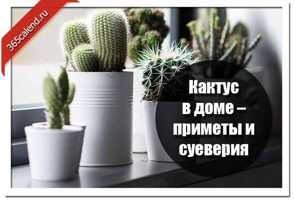 Можно ли держать кактусы дома?   news4ever.ru