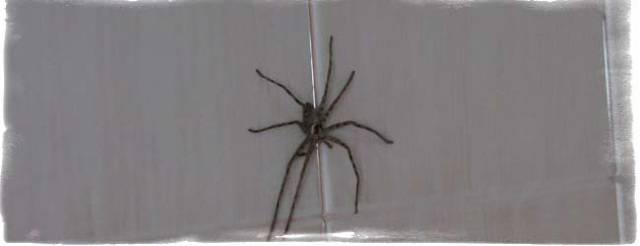 Не так страшен паук, как неприятен — выселяем непрошеного гостя. как избавиться от пауков в квартире своими силами?