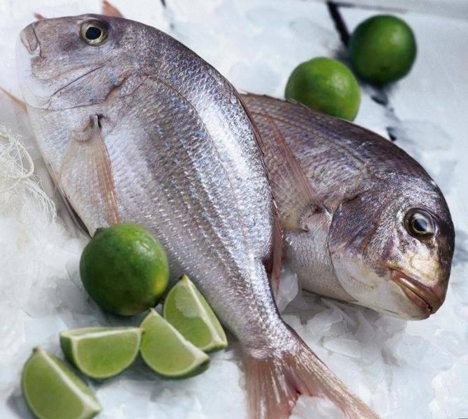 Сонник замороженная рыба окунь. к чему снится замороженная рыба окунь видеть во сне - сонник дома солнца