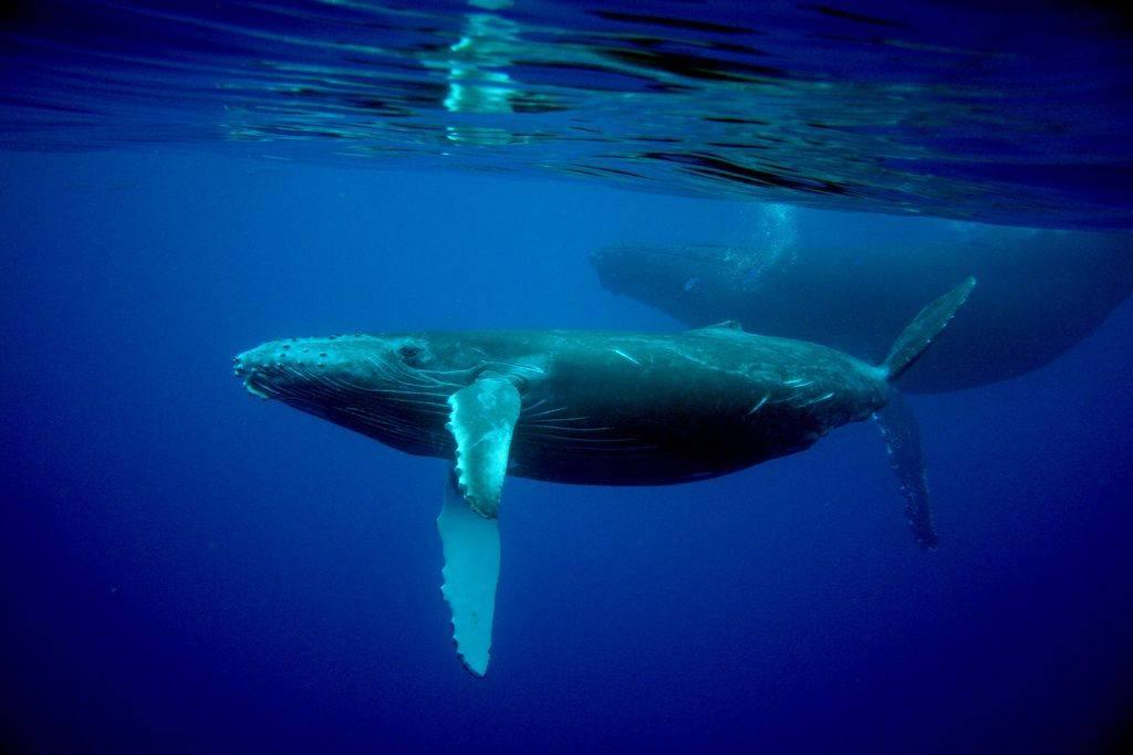 К чему снится хвост кита в море. кит приснился женщине. к чему снится кит по соннику хассе