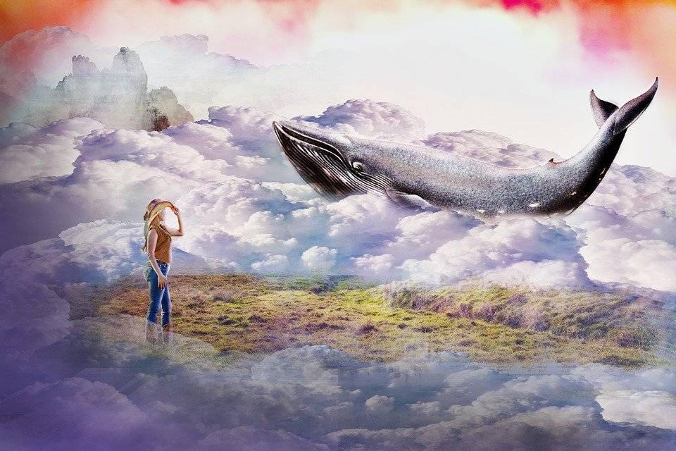 К чему снится кит во сне?