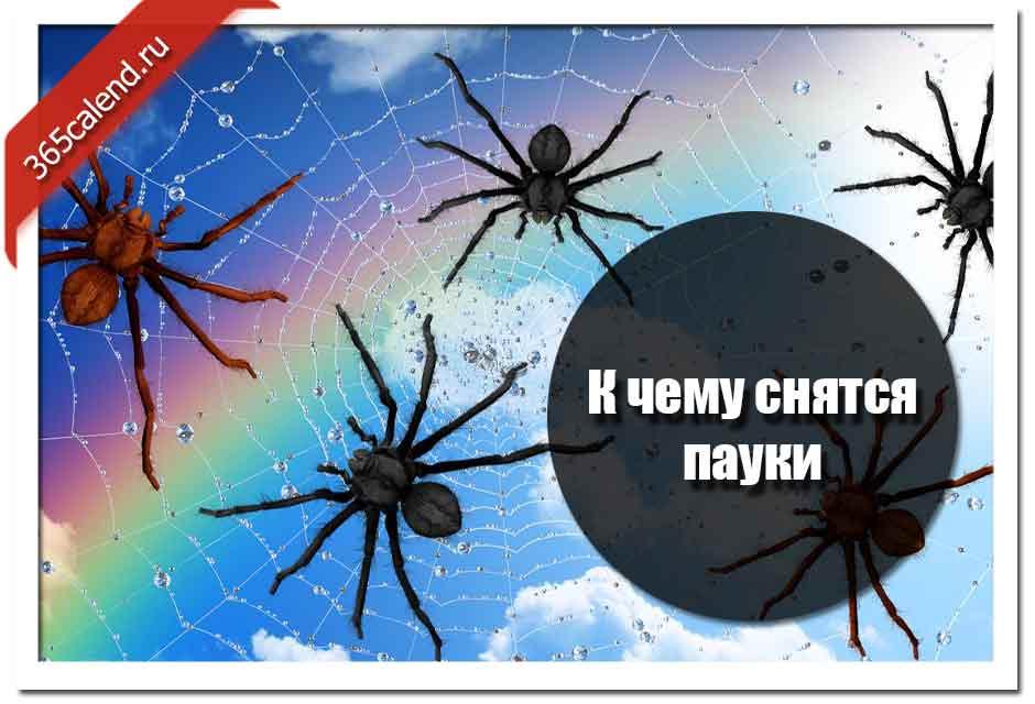 Сонник паук сидит на мне. к чему снится паук сидит на мне видеть во сне - сонник дома солнца