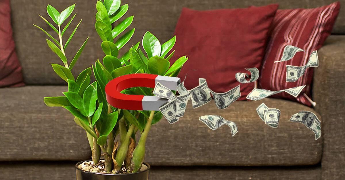 Комнатные растения, приносящие удачу и счастье в дом