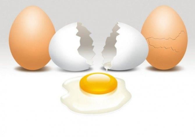 К чему снятся куриные яйца по соннику? видеть во сне куриные яйца – толкование снов.