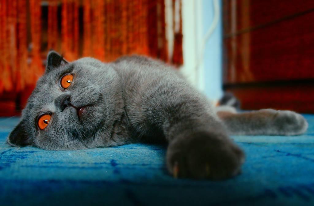 К чему снится чёрный котёнок? основные толкования — к чему снится чёрный котёнок: будьте бдительны!