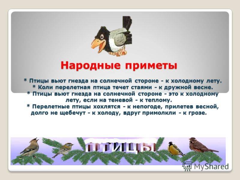 Народные приметы про птиц: что знаменует встреча с пернатыми