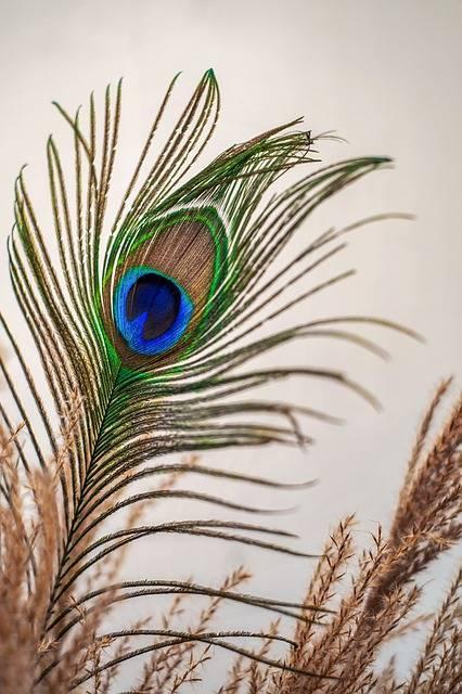 Можно ли держать дома страусиные перья. перо павлина для украшения дома