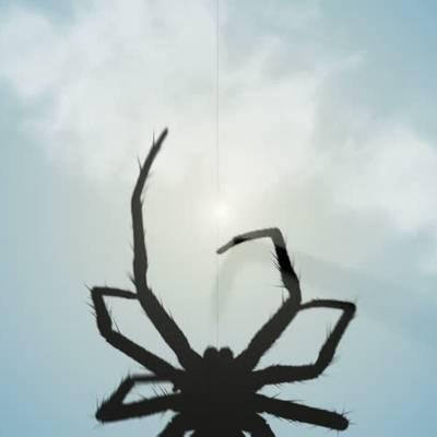 Приметы и суеверия о пауке в квартире вечером, днем, утром, ночью