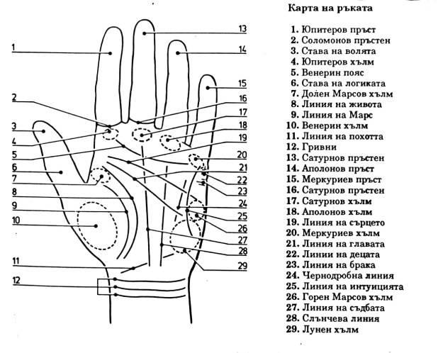 На какой руке смотрят линию жизни и что она значит