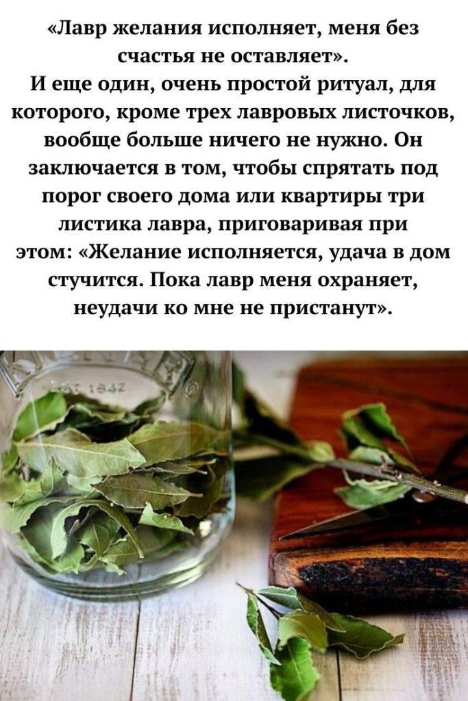 Лавровый лист магические свойства