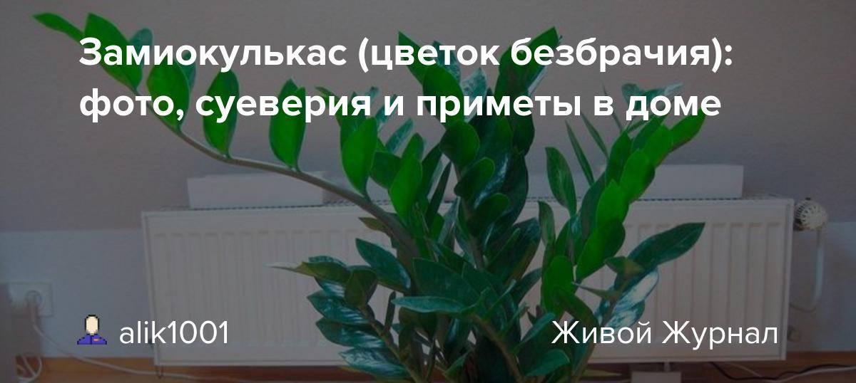 Приметы, связанные с кактусами