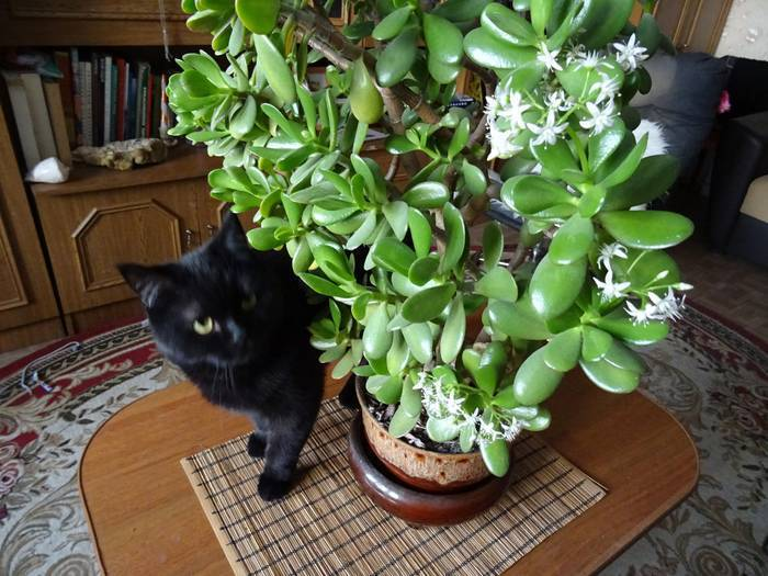 Какие комнатные растения нельзя выращивать дома, причины, список с фото