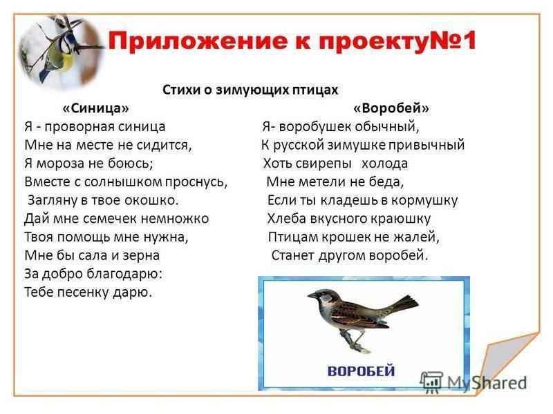 Приметы про птиц — узнайте, что вас ждет