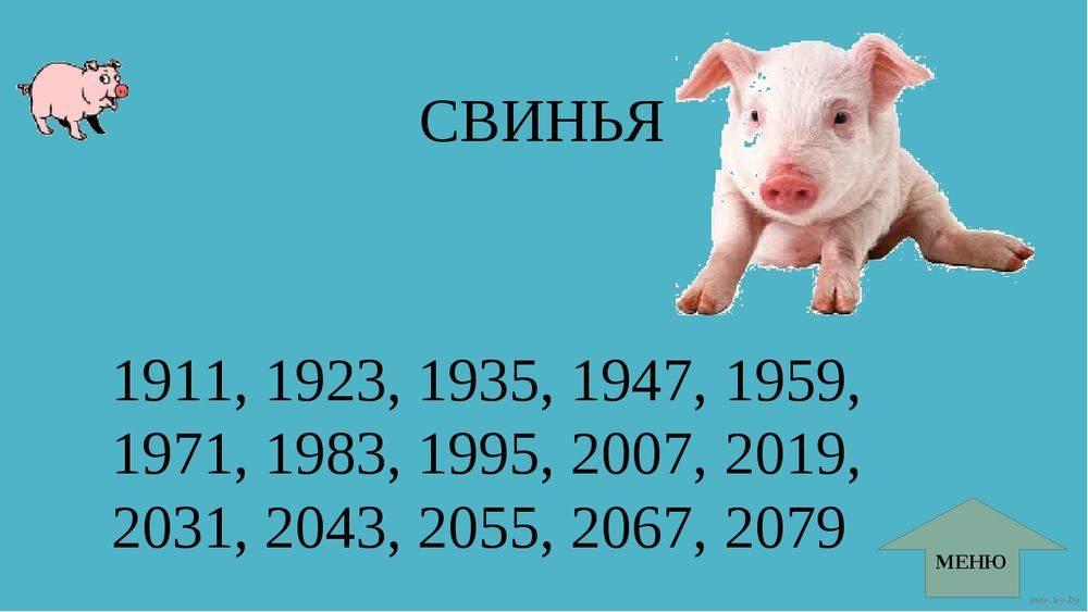 Год свиньи гороскоп, 2019 год какого животного