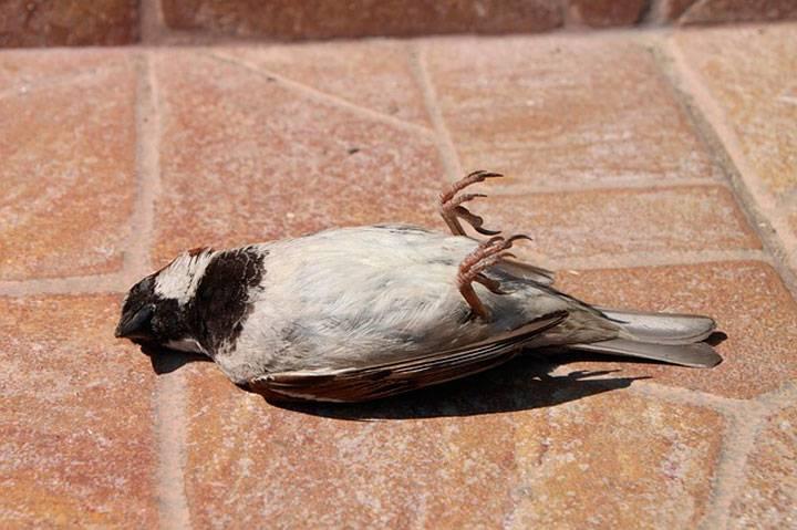 Умирающая птица