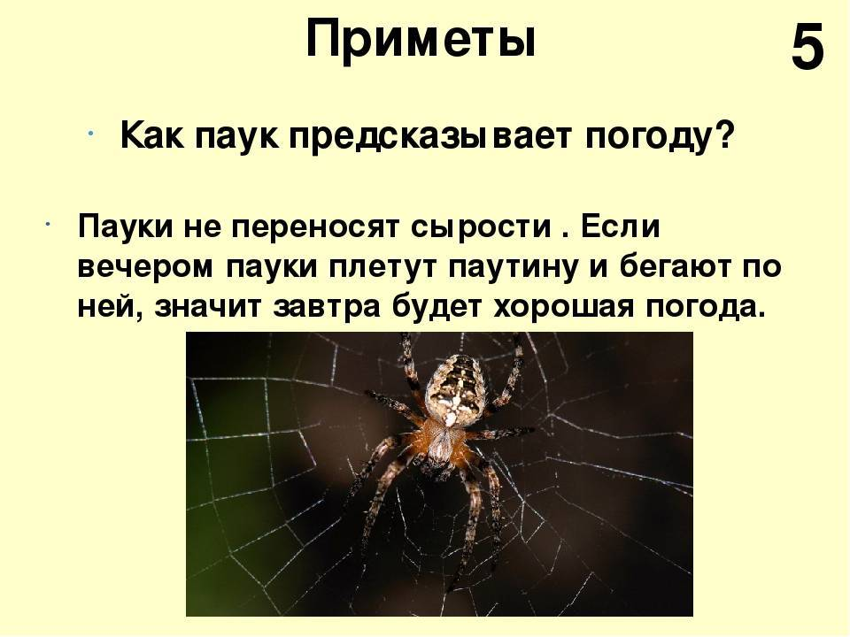 Почему нельзя убивать пауков в доме - red fox day