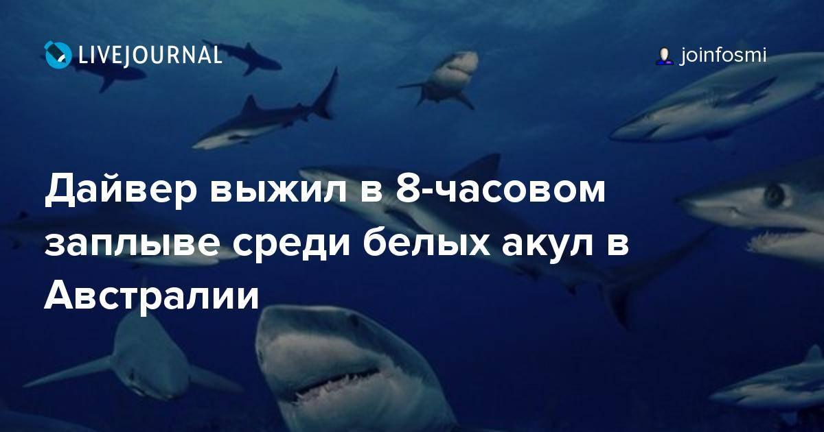 К чему снится акула в воде, на берегу или на суше? толкование сна для женщин и мужчин