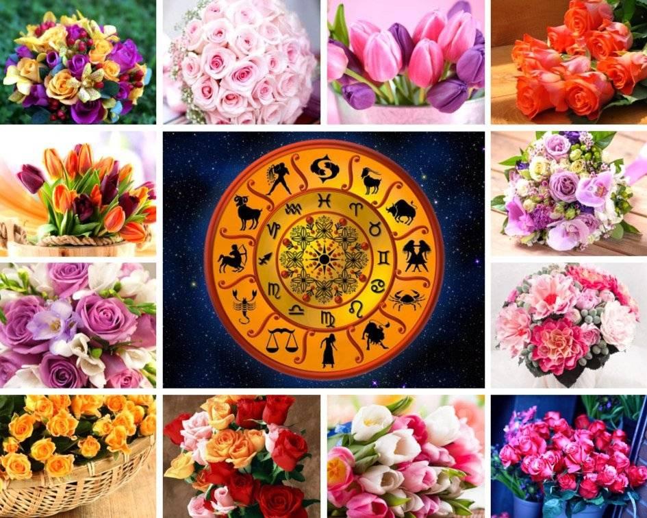 Какие цвета принесут удачу и успех каждому знаку зодиака