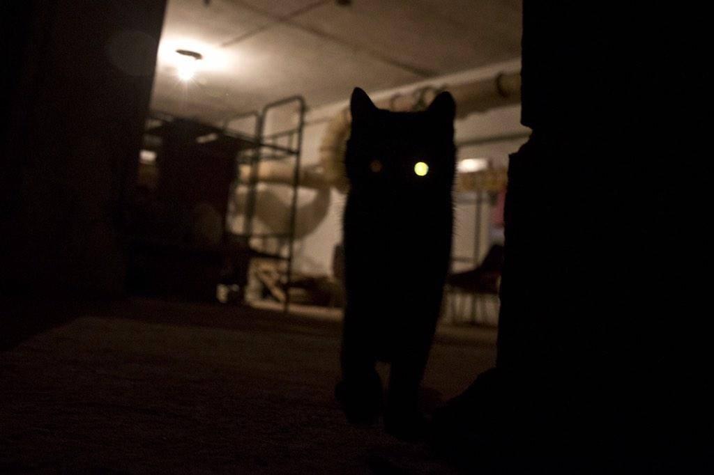 Как вызвать египетского кота днем без свечей