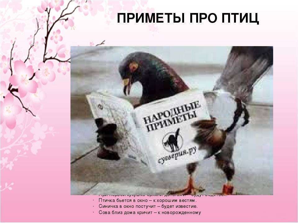 Примета — птица залетела в дом: к чему это, если в окно попала птичка, что значит, если покинула помещение сама, какие могут быть последствия?