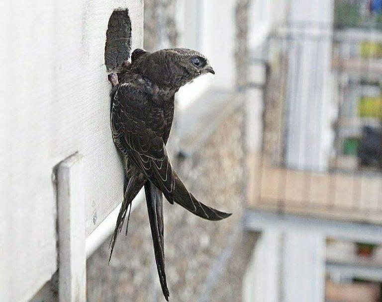 Птица, залетевшая в дом, сулит радостные или печальные известия