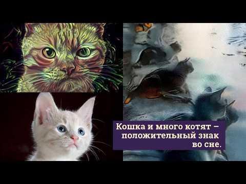 Сонник цветкова кошка