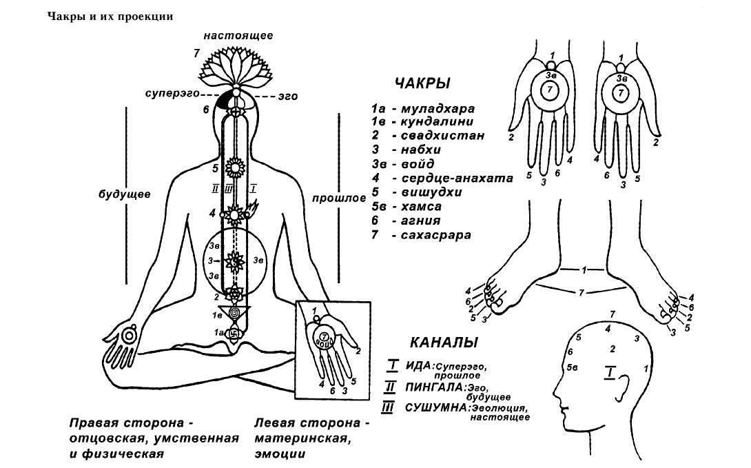 Чакральная система. биологические циклы человека.