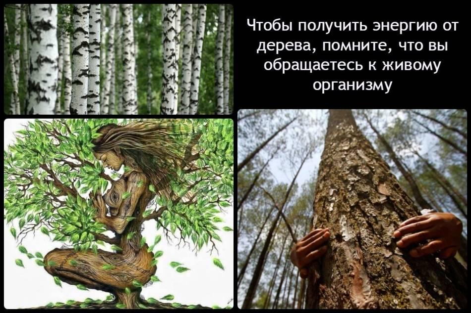 Деревья вампиры и доноры по знакам зодиака. деревья доноры и вампиры: как определить