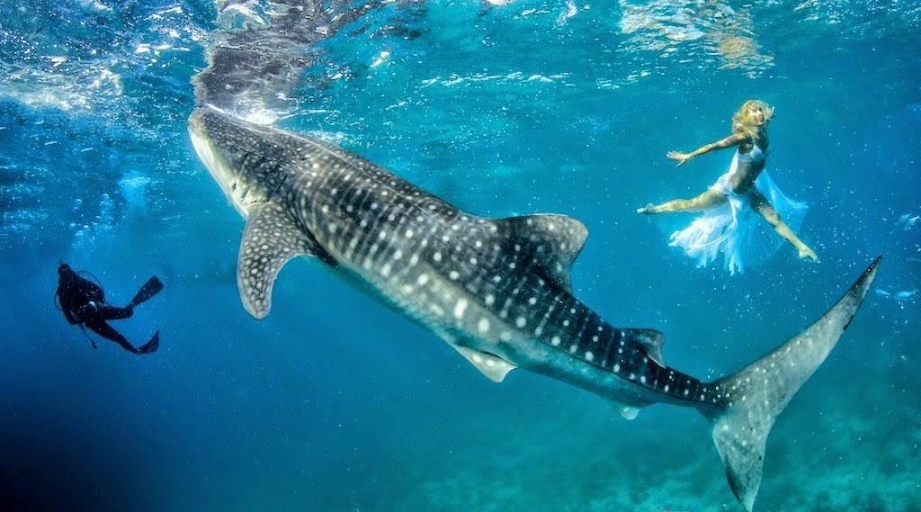 К чему снится акула в воде по соннику? видеть во сне акулу в воде – толкование снов.