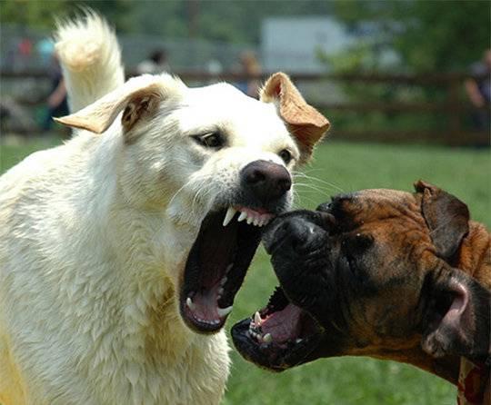 Три собаки нападают