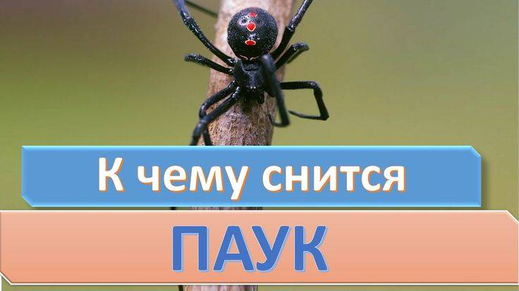 Сонник нападение паука. к чему снится нападение паука видеть во сне - сонник дома солнца