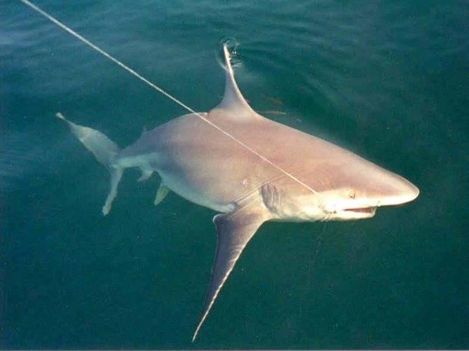 К чему снится напала акула по соннику? видеть во сне, что напала акула – толкование снов.