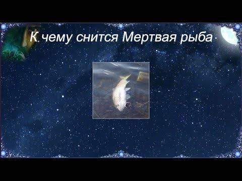 К чему снится живая рыба по соннику? видеть во сне живую рыбу – толкование снов.