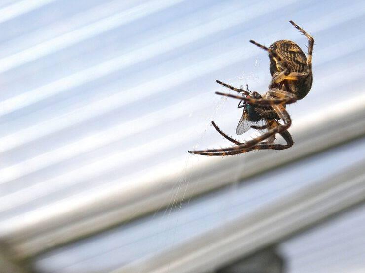 Приметы про пауков: разгадываем знаки судьбы