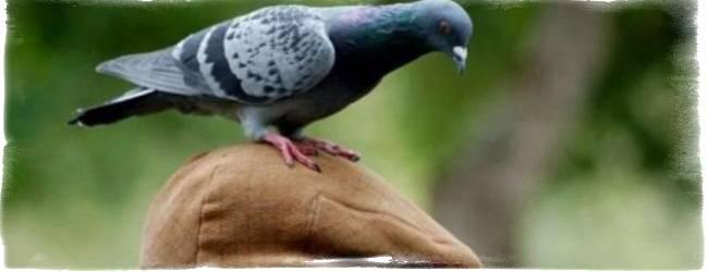 Примета: ворона (к чему каркает, стучит, села на окно)