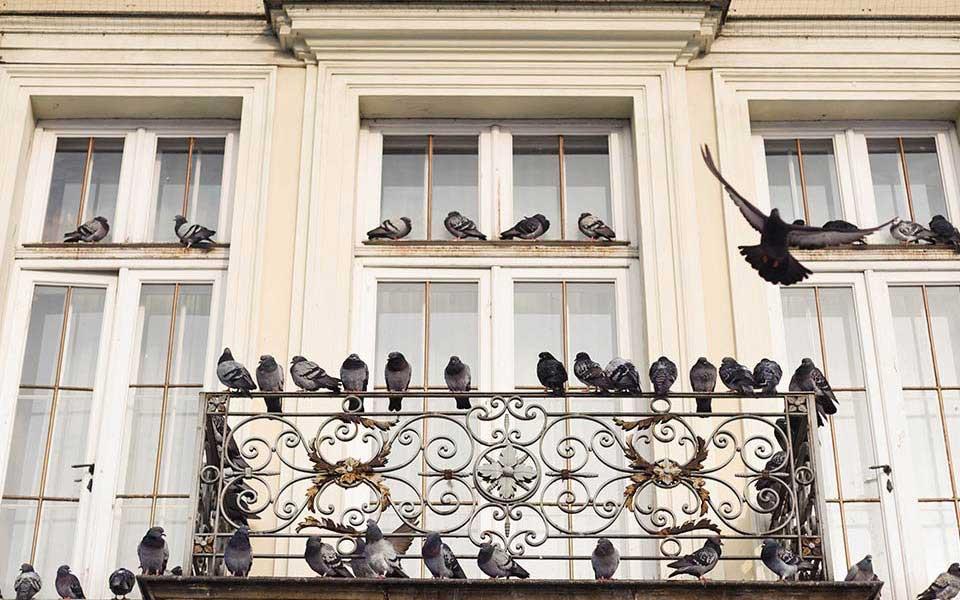 Голуби свили гнездо на балконе — к счастью