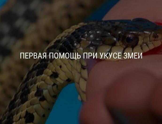 Укусила белая змея