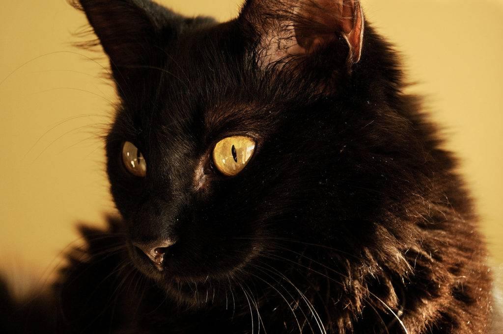 Чёрная кошка в небе