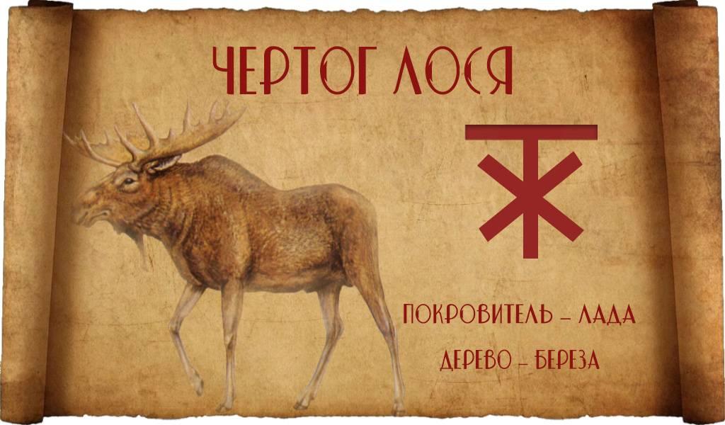 Чертог лося по славянскому гороскопу: характер, покровитель и дерево.
