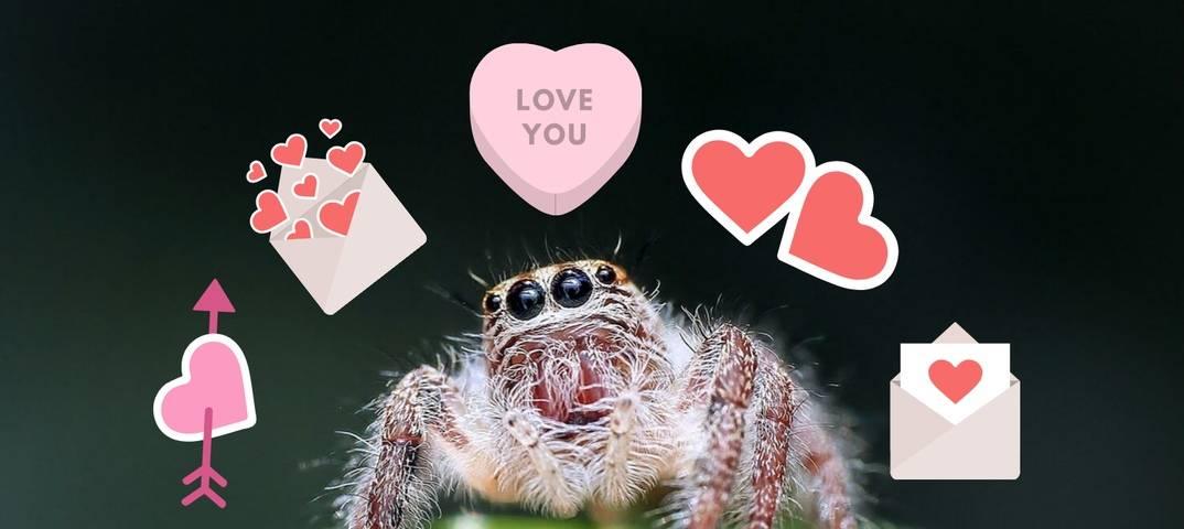 Почему нельзя убивать пауков дома?