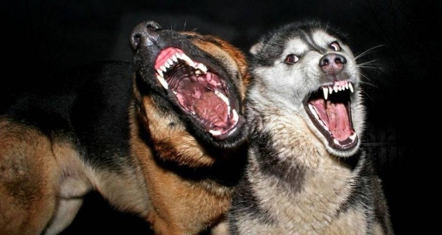 Сонник спастись от стаи собак. к чему снится спастись от стаи собак видеть во сне - сонник дома солнца
