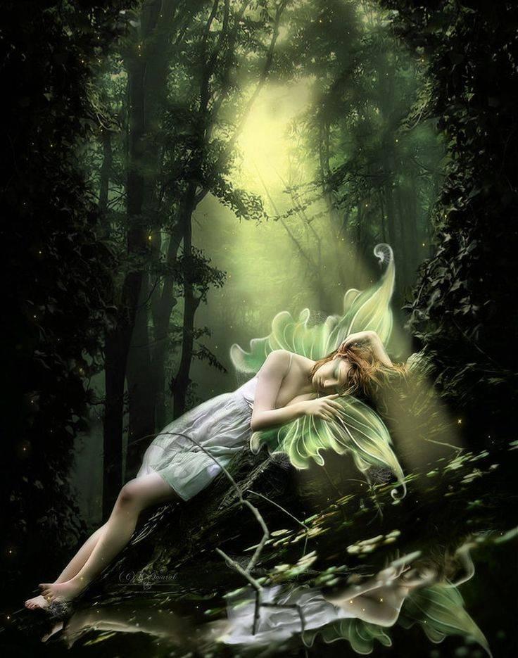 К чему снится лес. видеть во сне лес - сонник дома солнца