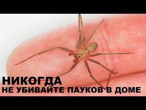 Почему нельзя убивать пауков? причины, приметы и религия